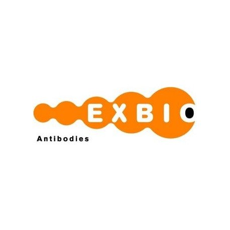 Annexin V - Dyomics 647