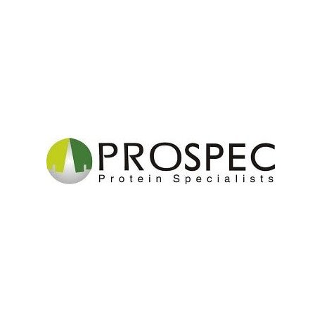 Recombinant Human Processing Of Precursor 4 Protein