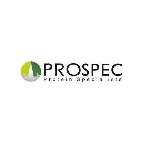Recombinant Human Progesterone Receptor Protein